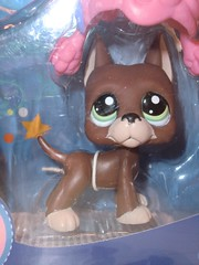 Petshop 1519 (MissLilieDolly) Tags: bear horse dog chien pet pets bird cat cheval chat panda tiger collection figurines dolly figurine miss animaux petshop tigre oiseau lilie hasbro ours 1519 missliliedolly