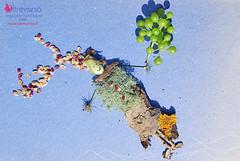 Volo di un sogno di mezza estate (OltreversoLab) Tags: semi corteccia licheni stonecraft giochiinspiaggia driftwoodcraft giochidafareinmontagna lavorettibambini creareconisassiraccoltialmare creareconisassi creareconisassoliniportatidalmare stonecraftideas driftwoodcraftideas lavoretticonisassi sculturedisassi creareconitesoridelbosco giochidafarenelboscoconrametti rmetti semielicheni