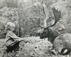 Tender offering (liquidnight) Tags: old blackandwhite bw nature girl monochrome beautiful childhood animals kids youth forest vintage children denmark photo europe stag child sweet wildlife young deer antlers collection photograph gift innocence offering present kindness buck regal gentle aarhus jutland marselisborgforests marselisborgforest