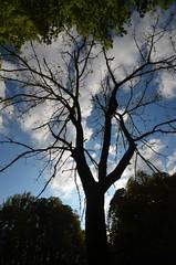 Scary Tree (esywlkr) Tags: tree halloween silhouette nc scary walnut northcarolina wnc gsmnp westernnorthcarolina