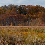 Fall foliage thumbnail