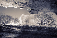 Tree Reflection XV (JB Morlot) Tags: reflection film water monochrome closeup sepia clouds puddle countryside nikon path decorative fineart serenity abstraction meditation concept wilderness relaxation escher timeless fm2 otherworld purity multispace