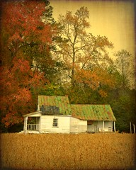 Autumn and the Abandoned Sharecropper'sHouse:  Nash County, North Carolina (EdgecombePlanter) Tags: autumn painterly fall texture colors rural nc beans farm fallcolors farming northcarolina textured soybeans tenant sharecropper likeapainting rurallandscape