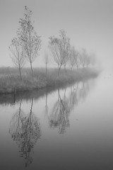 Trees in the Mist (genf) Tags: morning trees white mist black amsterdam grey early bomen sony gray perspective atmosphere zwart wit amstel grijs a77 ouderkerk sfeer tmt perspectief