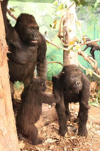 African Museum - Gorillas