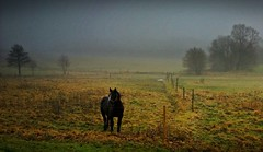 Novemberstimmung - November mood (fleckchen) Tags: november autumn fog deutsch