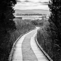 Path through the Tamar Island Wetlands Reserve (medXtreme) Tags: bw blackwhite australia hills tasmania paths australien monochrom tassie schwarzweiss weg hgel phragmitescommunis tasmanien commonreed commonwealthofaustralia vandiemensland bedecktsamermagnoliophyta gefsspflanzentracheobionta samenpflanzenspermatophyta commelinahnlichecommelinidae schilfrohrphragmitesaustralis schilfrohrephragmites sssgrasartigepoales sssgrserpoaceae australienkontinent einkeimblttrigeliliopsidaehemmonokotyledonen tamarislandwetlandsreserve lutriwita