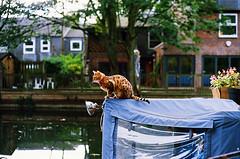 (Mute-Glasgow) Tags: park colour animal cat 35mm 50mm boat canal photo asahi pentax kodak victoria east bow scanned end 100 mx barge mile regents ektar