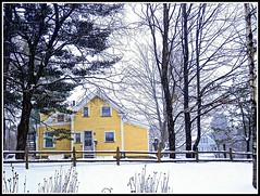 The Yellow House & Brown Fence In Chelmsford, MA. With Trees In Wintertime - Photo by STEVEN CHATEAUNEUF - December 17, 2013 (snc145) Tags: trees houses winter sky usa brown white snow detail texture nature beautiful yellow fence landscape outdoors photography photo scenery pretty seasons photos massachusetts snowstorm digitalcamera coldweather soe chelmsford thisphotorocks stevenchateauneuf ringexcellence olympussz14 pandaonflickr december172013