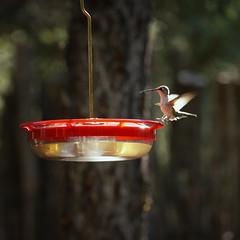 birds at Santa Fe (dasar) Tags: santafe