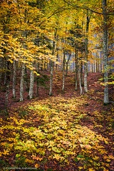 Towards the light (Christos Andronis) Tags: autumn trees orange brown green fall nature colors yellow season landscape outdoors europe quiet tranquility foliage greece balance tranquilscene beautyinnature thessaly kissavos thessalia greeknature