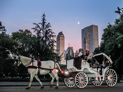 Paseo nocturno (DanielSan_05) Tags: nyc sunset horse newyork carriage purple centralpark manhattan bluehour