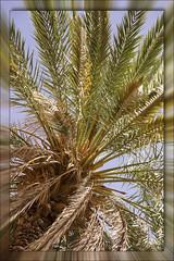 Under the palm tree (Ciao Anita!) Tags: friends tree desert boom morocco palmtree marocco albero palma sanddunes marokko deserto merzouga palmboom woestijn ergchebbi dunedisabbia zandduinen meknèstafilalet theperfectphotographer fotoworkshopnl