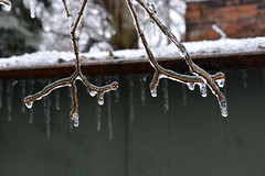 ice antlers (Mr.  Mark) Tags: winter storm cold tree ice frozen photo branch stock antlers freeze icicle markboucher