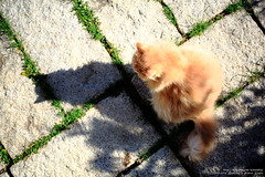 MAU_5039 (mau-daban) Tags: cat kitty