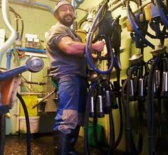 milking gear - feb. 2014 (Farmerbaer) Tags: beefy buff sturdy rubberboots gummistiefel brawny melker milker delaval stocky melkstuhl swissfarmer schweizerbauer milchkammer melkerbluse milkinggear milkmaster