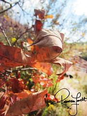 Weight By Rebecca Levitt (levittrebecca) Tags: autumn fall outside photo leaf trails stcatharines portfolio weight evm feb122014 sea235 rebeccalevitt