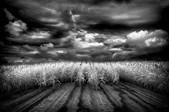 Before The Storm (shutterclick3x) Tags: ir countryside infrared backroads infraredblackandwhite infraredbw flickrdiamond absoluteblackandwhite frankloose