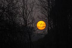 TRAMONTO NEL BOSCO. (FRANCO600D) Tags: canon tramonto sole buio bosco incubo nervesadellabattaglia eos600d franco600d