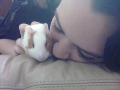 (carolinacenz) Tags: pet baby love argentina animal photography buenosaires kodak young ellie easyshare cobayo c813 kodakeasysharec813
