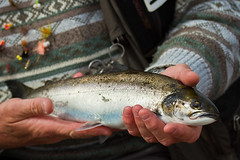 2446 (Cap'n Fishy) Tags: flyfishing seatrout southuist