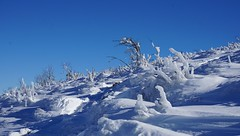 Versant nord  -  North side (Philippe Haumesser Photographies (+ 4000 000 views) Tags: snow nature glace ice montagnes mountain mountains paysage paysages landscape landscapes hiver winter ciel sky vosges alsace elsass france hautrhin 68 3sony ilce6000sony alpha 6000 sony 169 2017