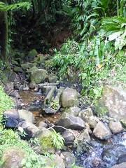 """Petit RU de LA SOUFRIERE . (♥charlyzamour♥ """" vous remercie pour vos visite) Tags: guadeloupe antilles france fruits ru ruisseau végétation arbres"""