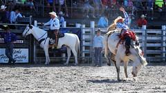 P3110140 (David W. Burrows) Tags: cowboys cowgirls horses cattle bullriding saddlebronc cowboy boots ranch florida ranching children girls boys hats clown bullfighters bullfighting