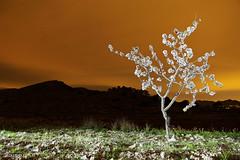 IMG_0929 ALMENDRO EN FLOR (digsoto - Diego Soto) Tags: almendro en flor night perin cartagena spain murcia longexposure largaexposicion
