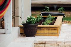 JBs 365 project 2017 - No. 71/365 - 20170312 (JakeB.) Tags: jbs365project2017 homegardening healthyeating vegan vegetarian herbs herbgarden earthbox homemade diy paverdeck