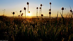 Hello Sunshine ... (sabinelacombe) Tags: berreletang paca provence bouchesdurhone soleil leverdusoleil rayons herbes champs insecte