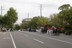 Horse drawn carriages head along Arden Street in North Melbourne, headed from their stables for another day of covering the city in horse shit (Marcus Wong from Geelong) Tags: piss shit stink smell odour horse drawn carriage touristtrap horsedrawncarriage melbourne melbournecbd