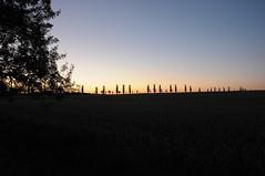 Deutschland Sächsische Schweiz DSC_0475 (reinhard_srb) Tags: deutschland sächsische schweiz lilienstein ebenheit sonnenuntergang windsschutzstreifen bäume kontur schattenriss horizont orange blau dämmerung abend licht goldene stunde