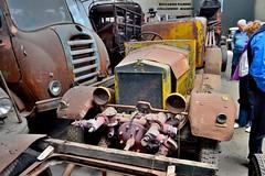 fiat 614 (riccardo nassisi) Tags: collezione righini rust rusty scrapyard collection camion truck ruggine epave alfa romeo 950 900 fiat old car auto