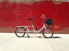 Peugeoooot (jimn) Tags: 20inchwheels custom peugeot cargobike
