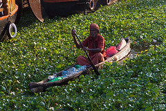 Green boat (yuriye) Tags: recycle recycling plastic boat bottle yuriye man plant green old india indian malayalam kerala canal chanel canel water alappuzha alleppey collect small morning tradition greenpeace peace