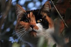 Gatto (berry9324) Tags: miao cat gatto micio animale animals natura natur felino mew