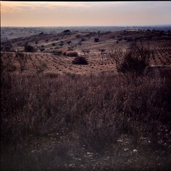 Winter landscape (davidgarciadorado) Tags: diapositive velvia 120film 6x6 rolleiflex zeissplanar