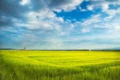 A field in Spring (Bernhard Sitzwohl) Tags: spring field austria polarizer technique landscape nature outdoor wheat yellowblue clouds cloudscape