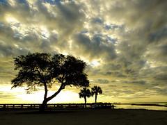 1689 - DSCF5675A flickr (tshoemaker) Tags: sunrise clouds morsepark murrellsinlet southcarolina terryshoemaker fujihs50camera liveoak