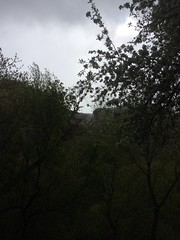 IMG_3811 (augiebenjamin) Tags: provorivertrail provocanyonparkway provo orem utah utahvalley mountains spring snow trees provoriver blooms provocanyon utahlake clouds sun sky