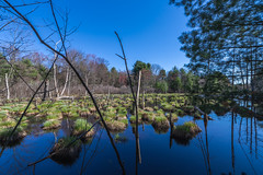 Assabet River Wetlands (moerden68) Tags: sony ilce7m2 sonya7ii distagont15mmf28zf2 assabetriverwildliferefuge massachusetts wetlands pond landscape spring