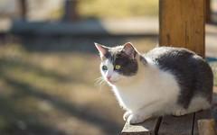 kittens (45) (Vlado Ferenčić) Tags: cats catsdogs kitty kittens animals animalplanet hrvatska croatia zagorje hrvatskozagorje nikond600 sigma15028macro vladoferencic vladimirferencic