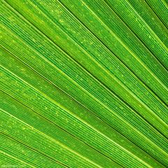 g r e e n (ewaldmario) Tags: nikon green plant leaf structure texture d800 nature art artificial naturefineart makro macro nahaufnahme closeup diagonal ewaldmariocom ewaldmario palmleaf palm abstract
