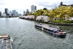 cherry blossoms and pleasure boat, Sakuranomiya, Osaka (jtabn99) Tags: boat cherry blossom river osaka sakuranomiya tenmabashi bridge japan nippon nihon 20170409 大阪 日本 桜宮 天満橋 遊歩道 川 大川