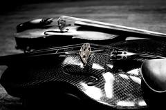 bridge (Janelle Tong) Tags: janelle tong photography tony ward studio still life upenn houston hall violin traditional carbon fiber yin yang bridge closeup balanced black white canon eos rebel t5