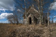 Soon to be hidden (Len Langevin) Tags: abandoned old building house derelict forgotten empty weatheredwood alberta canada prairie nikon d300s tokina 1116