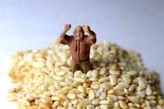 AD8A2352_p (thebiblioholic) Tags: seeds macromondays closeup lensbaby velvet56 kenko kenko20 365 tiny miniature