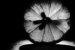 Seed Sillhouette (Melissa_JMH) Tags: lemon macro mondays macromondays memberschoiceseeds bw mono sillhouette shadow seeds juice tamron tamron90mm 90mm nikon nikond610 d610
