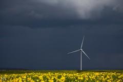 Premiers Contrastes (NeoNature) Tags: canon nature landscape paysage france normandie normandy éolienne windmill sky ciel cloud nuage convection rain pluie colza canola field champs calvados orage storm